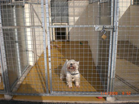 Wall And Floor Treatments For Kennels Amp Catteries From